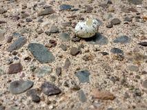 狂放的鸟鸡蛋被孵化的开放 免版税库存图片