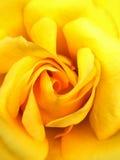 狂放的黄色唤醒 库存图片