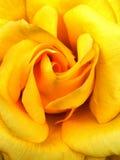 狂放的黄色唤醒 免版税库存图片