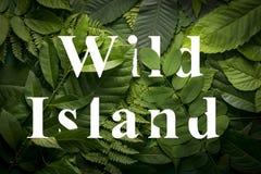 狂放的绿色密林叶子的狂放的海岛概念 免版税库存图片