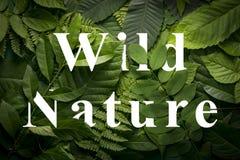 狂放的绿色密林叶子的狂放的自然概念 免版税库存图片