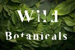 狂放的绿色密林叶子的狂放的botanicals概念 库存照片