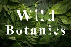 狂放的绿色密林叶子的狂放的botanics概念 免版税库存图片