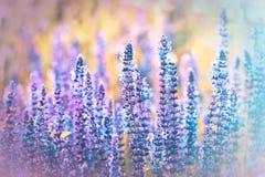 狂放的紫色草甸花 库存图片