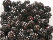 狂放的黑莓在白色背景关闭 免版税库存图片