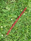 狂放的starwberries 免版税图库摄影
