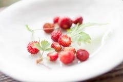 狂放的strawbwerries 免版税库存照片