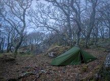 狂放野营在被困扰的森林 免版税库存图片