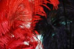 狂欢节在威尼斯用羽毛装饰,意大利 免版税库存图片
