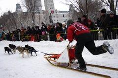狂欢节狗魁北克种族雪撬 免版税库存图片
