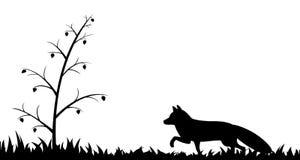 狐狸剪影在草的 免版税库存照片