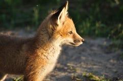 狐狸工具箱红色 免版税库存图片