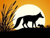 狐狸的剪影 免版税库存照片