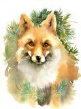 狐狸的画象 库存图片