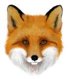 狐狸 皇族释放例证