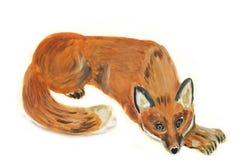 狐狸 库存图片