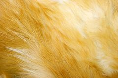 狐皮红色纹理 图库摄影