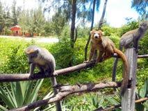 狐猴家庭在马达加斯加 图库摄影
