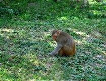 狒狒域绿色开会 库存图片
