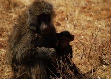 狒狒女性橄榄色年轻人 库存图片