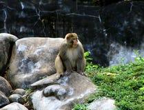狒狒岩石坐的表面 免版税库存照片