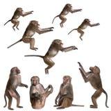 狒狒许多视图 免版税图库摄影