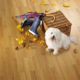 狗、伞、起动、篮子和autmn叶子在木条地板 免版税库存照片