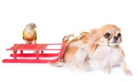 狗、鸟和圣诞节 免版税库存图片
