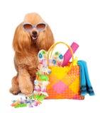 狗。海上的假日。 库存图片