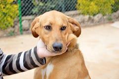 狗一个了不起的伴侣 免版税库存照片