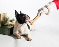 给狗一根骨头 免版税库存图片