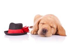 狗一点疲倦的显示 库存照片