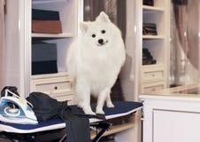 狗不会要求干净的裤子和衬衣日报 图库摄影