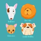 狗不同的品种  向量例证