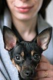 狗与爱恋的所有者的面孔特写镜头在背景 免版税图库摄影