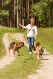 狗临时替人照看孩子的人走与在皮带的许多狗 用不同的狗品种的狗步行者在美好的自然 免版税库存图片
