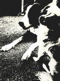 狗二 免版税库存图片