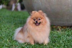狗享受它的时间室外在庭院里 使用在一个露天场所 免版税库存图片