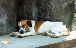 狗休眠 一条大白色狗以红色斑点休息 免版税库存照片