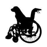 狗传染媒介剪影在轮椅的 免版税库存图片