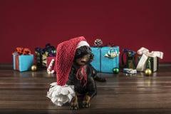 狗作为在新年度和圣诞节的礼品 免版税库存图片