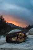 狗作为太阳下来 免版税库存照片