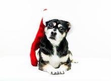 狗佩带的圣诞节长袜-中心 图库摄影