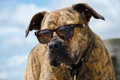 狗佩带的树荫 免版税图库摄影