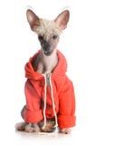 狗佩带的毛线衣 免版税库存照片