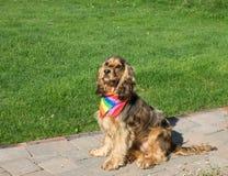狗佩带的自豪感彩虹围巾 库存照片