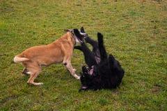 狗使用 图库摄影