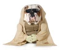 狗修士 免版税库存照片