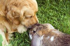狗兔子 免版税库存照片