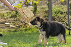 狗公园 图库摄影